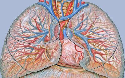 Descubra lo que Google ha logrado para diagnosticar cáncer con solo una imagen.
